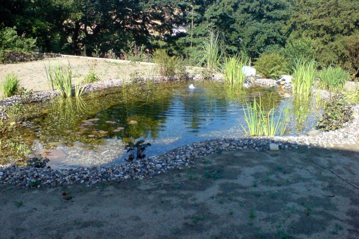 Teich mit Bepfanzung